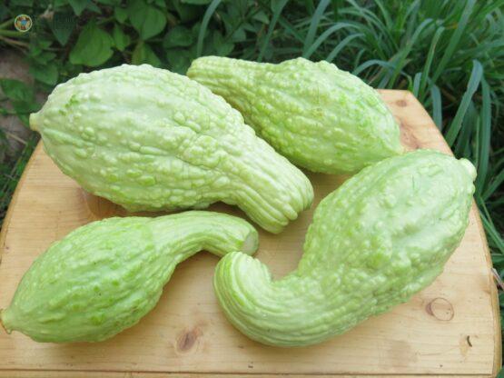 Семена кабачка Крукнек пупырчатый
