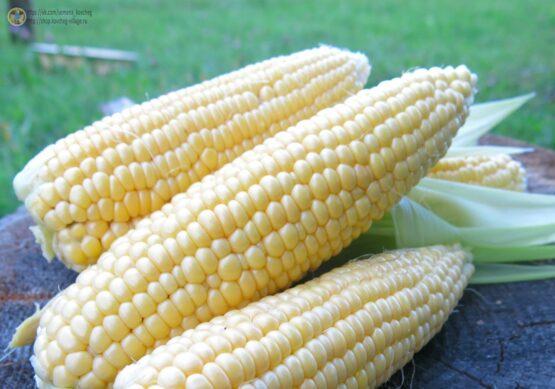 Семена кукурузы сахарной Экспресс