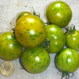 Семена томата Абраказебра