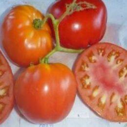 Семена томата Арбуз