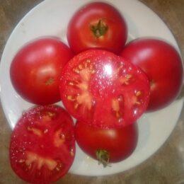 Семена томата Брикодей