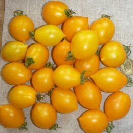 Семена томата Джаджу