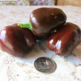 Семена перца сладкого Мини белл чоколате
