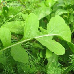 Семена рукколы Кореянка