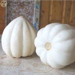 Семена тыквы  Жёлудь белый
