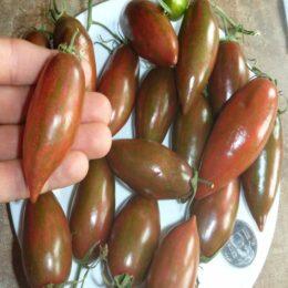 Семена томата Фиолетовый Изумруд