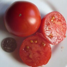 Семена томата Честное Слово Ливингстона