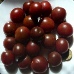 Семена томата Чёрный опал