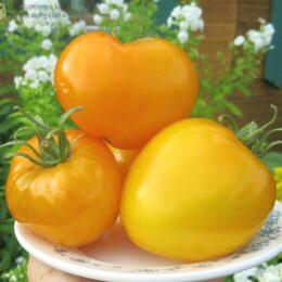 Семена томата Алтайский мёд