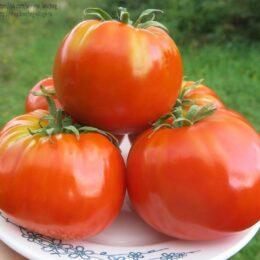 Семена томата Коробейник