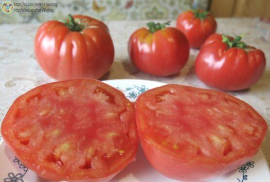 Семена томата Легендарная Сызранская розовая ранняя помидора