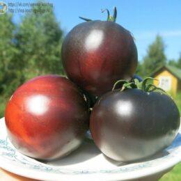 Семена томата Черный красавец