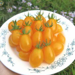 Семена томата Виноград оранжевый