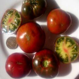 Семена томата Гном Медная Голова