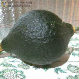 Семена тыквы Чикагский бородавчатый Хаббард