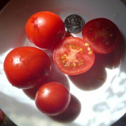 Семена томата Финский Карлик